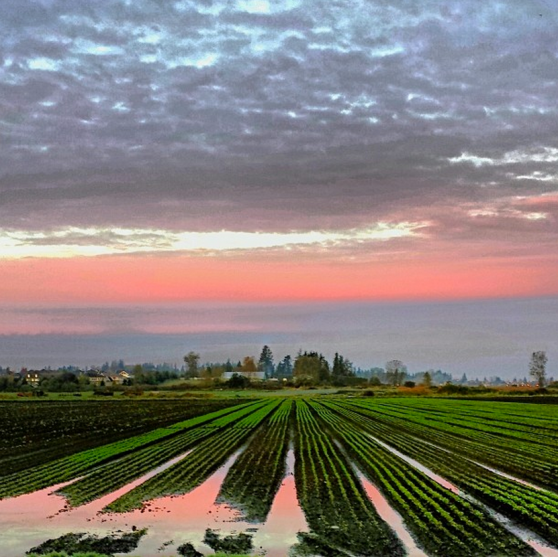 An instagram'd shot of a waterlogged field in South Surrey. Having raised her kids alongside the same neighbours for the past 10 years, Polly feels strongly connected to her community here.